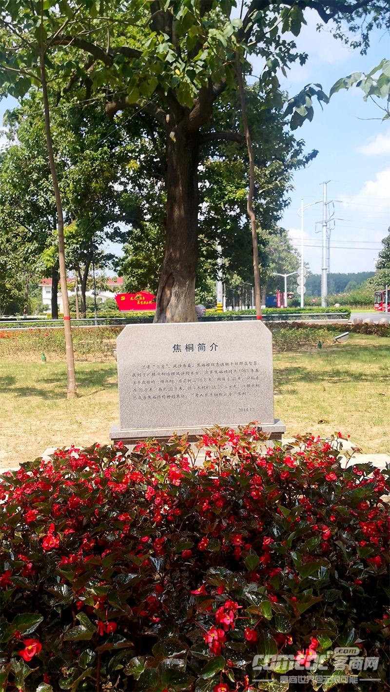 """不忘初心  砥�Z前行 ―2020""""河南�n南商���h建""""系列活�印�―走�M�m考"""