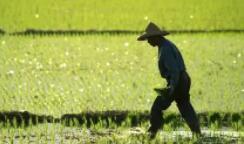 河南农业因强降雨严重受损 种粮能否不再靠天吃饭?